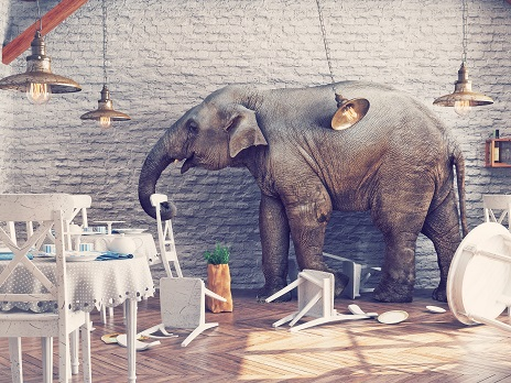 Syv elefanter forsvundet fra Konventum