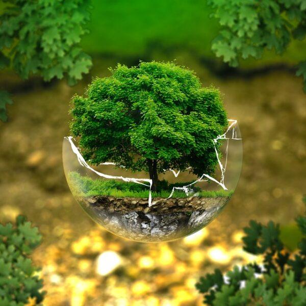 Rungstedgaard og Konventum opnår international guld status indenfor bæredygtighed