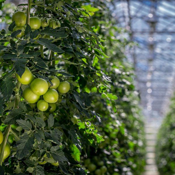 En dag i bæredygtighedens tegn på Rungstedgaard